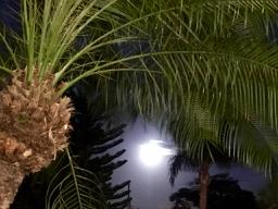 Moonrise Spring 2019